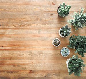 Housewarming Houseplants